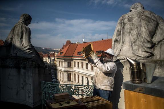 Un apicultor revisa un panal de abejas en la azotea del Ayuntamiento de Praga (República Checa)  - FOTO: EFE