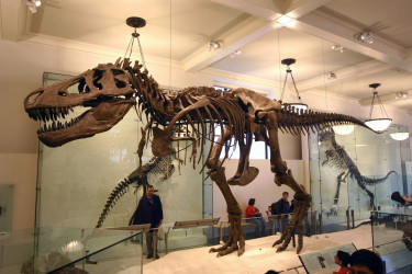 Un esqueleto de dinosaurio
