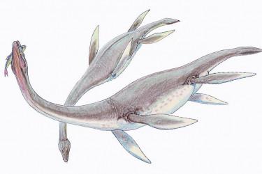Plesiosaurios - FOTO: WIKIPEDIA