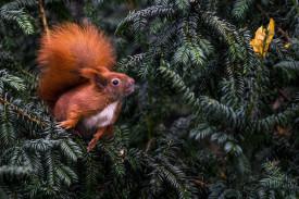 Una ardilla busca comida - FOTO: EFE