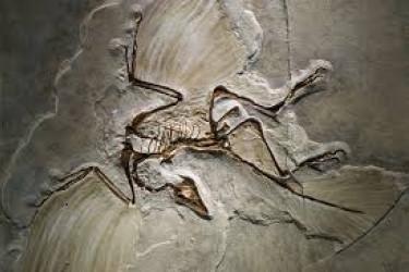 Archaeopteryx, el más antiguo entre los géneros extintos de aves
