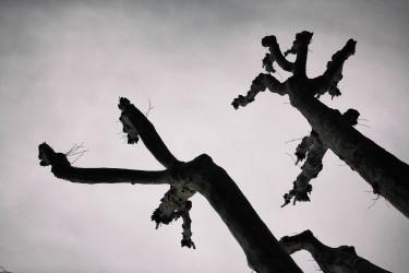 Imagen de árboles podados - FOTO: Esteban Delaiglesia