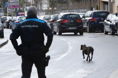 Un agente de la Policía Local observa a la perra que circula por la mitad de la calle - FOTO: Fernando Blanco