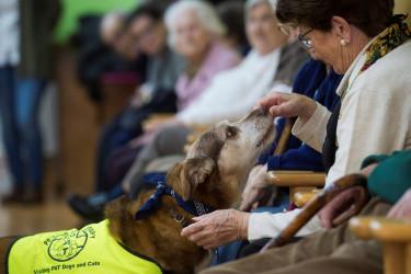 El perro Miko durante la terapia con personas mayores, en el centro de día San Cipriano en Bezana (Cantabria) - FOTO: EFE/Pedro Puente Hoyos