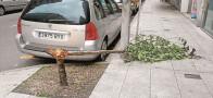 Unha árbore rota invade a beirarrúa no Ensanche