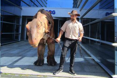 El director de Dinosauria Experience, Pierre Cujean, con el Tiranosaurio Rex en su visita a la sede del Grupo Correo Gallego - FOTO: ECG
