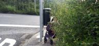 La abundante maleza invade la rúa do Cottolengo