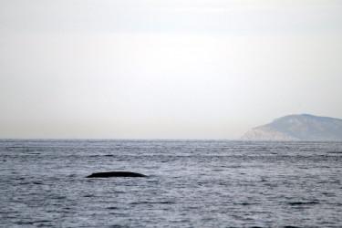 Las ballenas regresan a Galicia