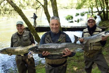 Primeros salmones de la temporada pescados en el río Ulla