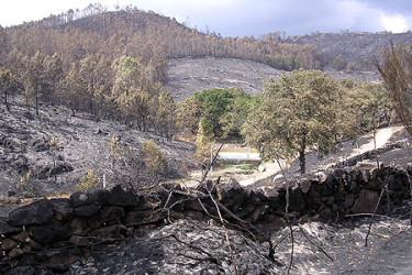 Galicia en llamas. Secuelas del incendio en Touron, Ponte Caldelas, enviadas por Lourdes