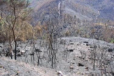 Galicia en llamas. Muerte en el río Almofrey (Cotobade), enviadas por Jose Luis Murio Ozores