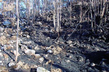 Galicia en llamas. Efectos da vaga de lumes sobre o patrimonio arqueolóxico na Comarca do Sar, enviadas por Eloy Rodriguez Carbia