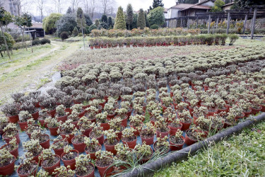 Vivero municipal de plantas de Lamas de Abade
