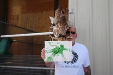 Fotografía del 21 de mayo de 2017, del presidente y propietario del Lion Habitat, Keith Evans, quien posa junto a la jirafa Ozzie y uno de sus dibujos en el interior del santuario animal ubicado a unas 16 millas al sureste de Las Vegas, Nevada (EE.UU.).  - FOTO: EFE