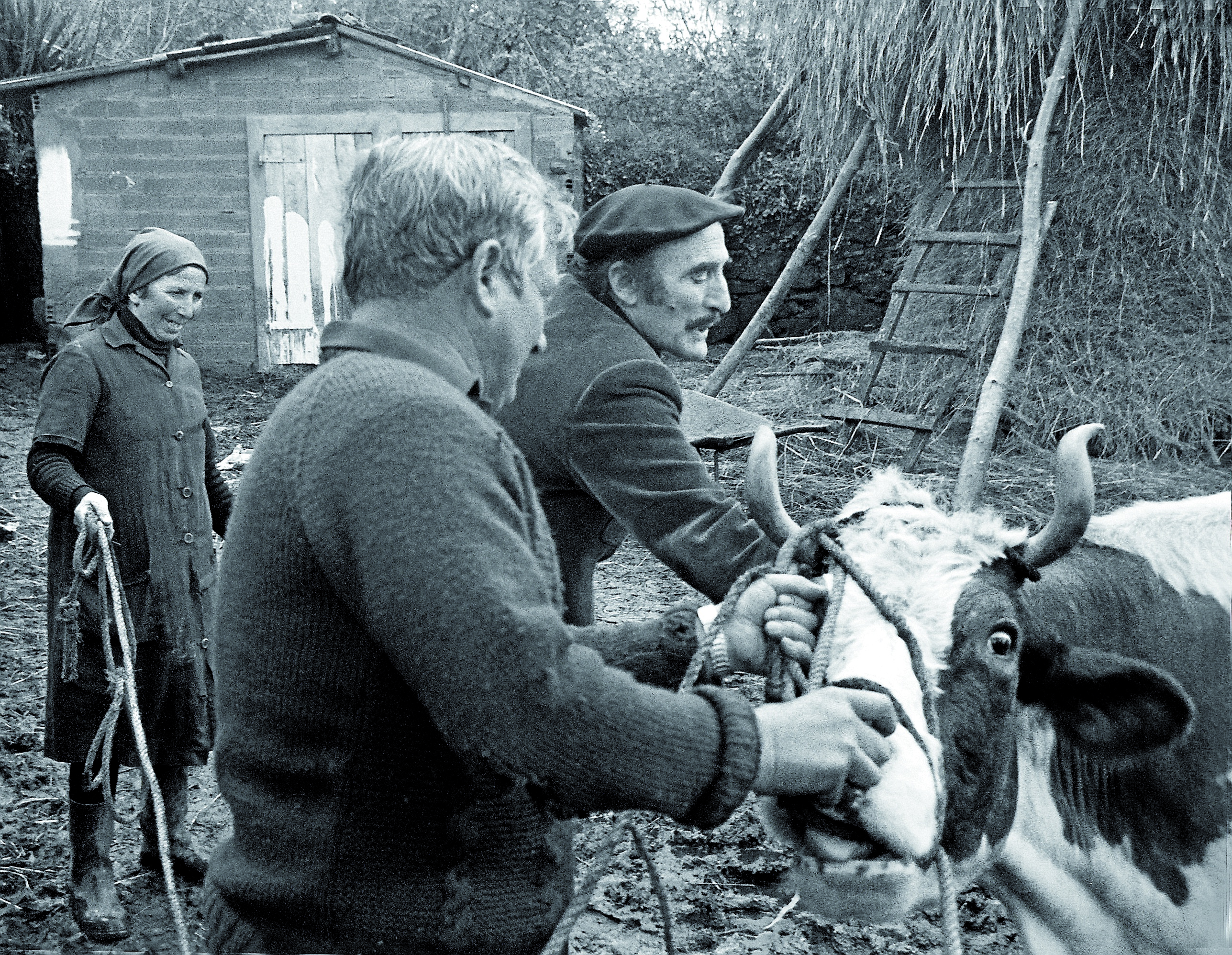 Don Atanasio, el veterinario municipal y padre de Chema Ríos, poniendo una inyección a una vaca. Fueron sus constantes visitas a las aldeas las que originaron la enigmática foto