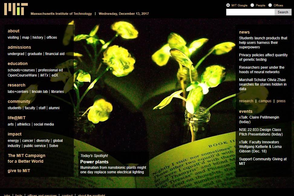 El sitio web del MIT de Masschusetts muestra las plantas nanobiónicas emitiendo luz - FOTO: Captura