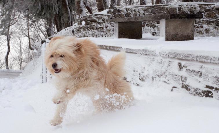 Un perro juega en la nieve en Pedrafta do Cebreiro (L - FOTO: EFE