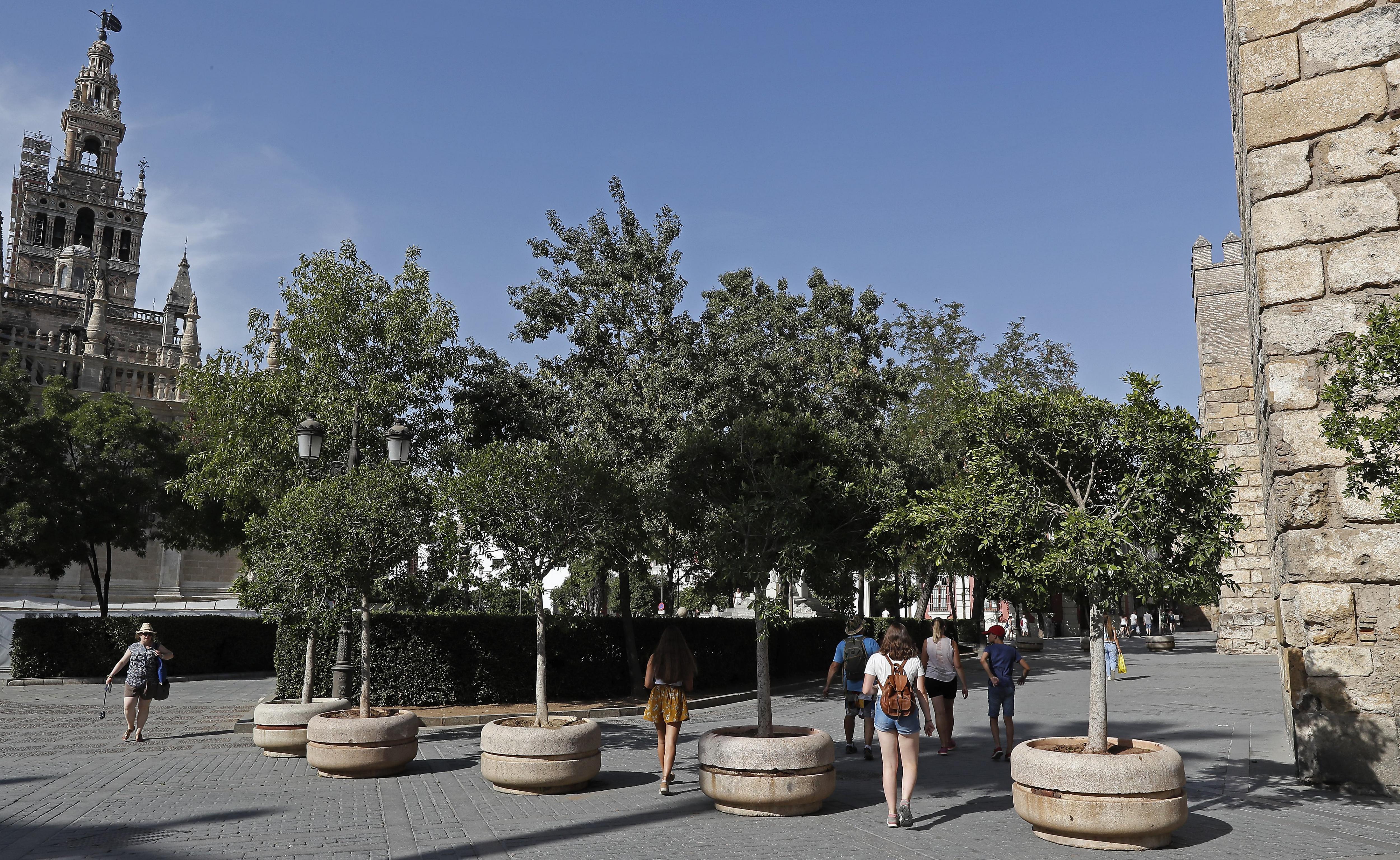 Maceteros con árboles en Sevilla - FOTO: EFE