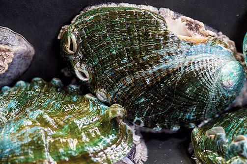 Luis de las Alas - FOTO: Conchas de abalón