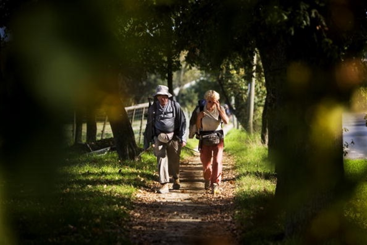 Peregrinos en el Camino de Santiago - FOTO: E.P.
