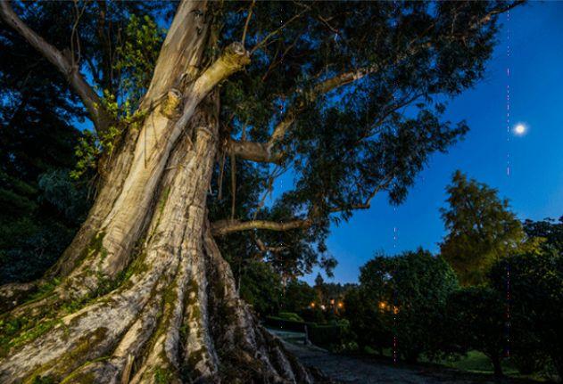 Árbores Senlleiras de Galicia